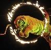 Цирки в Воронеже