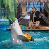 Дельфинарии, океанариумы в Воронеже